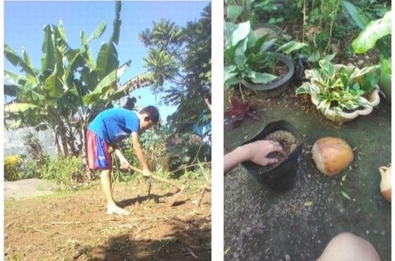 Siswa MTs 1 Banjarnegara praktek menanam jahe